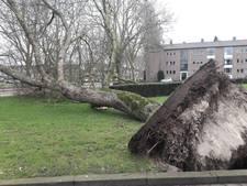 Stormschade: Waarom de ene boom blijft staan en de andere niet