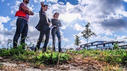 Kortrijk engageert zich voor het milieu met ByebyeGrass-charter : minder gazon en méér bloemen