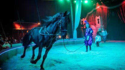 'Cavallo Gitano' laat paarden bewegen op zigeunermuziek