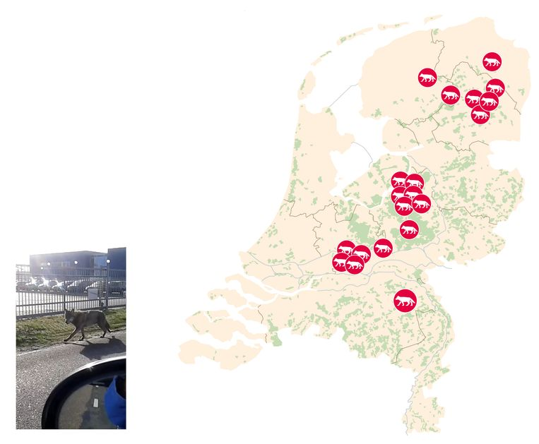 null Beeld Thijs Van Dalen