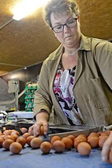 Eierschandaal zorgt voor onzekerheid onder Twentse kippenboeren