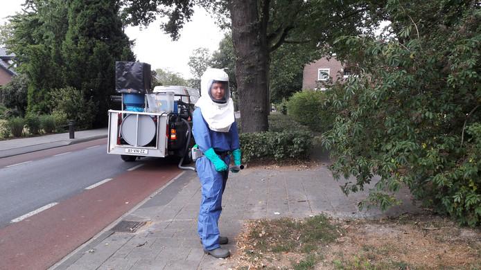 Bestrijding van de eikenprocessierups aan de Steenheuvelsestraat in Leuth.  Foto DG