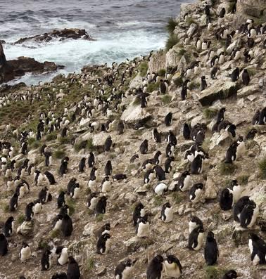Te koop: Pebble, een koud eiland vol met pinguïns maar wat moet het kosten?