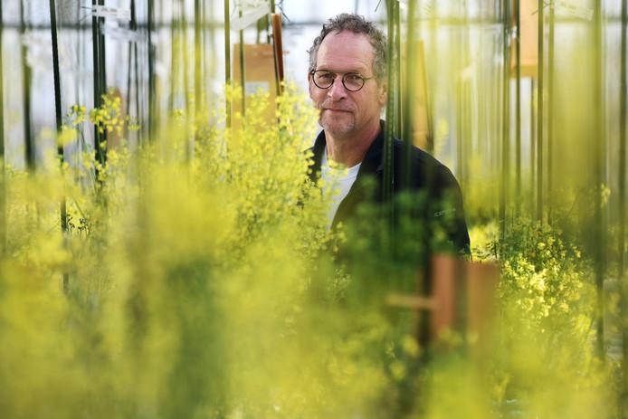 Frans van den Bosch op zijn werkplek tussen de broccoliplanten Foto William Hoogteyling.