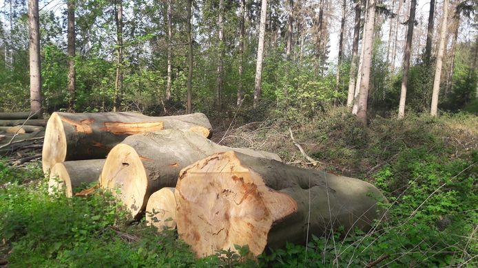 Tegen bomenkap in Soest, zoals hier in bosgebied Laag Hees, zijn vorig jaar 36 bezwaarschriften ingediend, waarvan er slechts vijf zijn gehonoreerd.