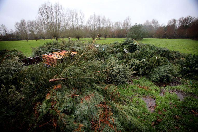 In Sint-Michiels ligt de stapel bomen al klaar.