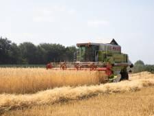 Aardappelboeren: Tot 20 procent minder omzet door droogte