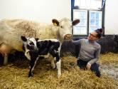 Koeien, konijnen en geiten van de Stadsboerderij ontvangen weer bezoek