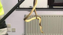 Gedumpte slang aangetroffen in doos in bos