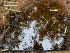 Droogte funest voor zeldzame beekvissen: 'Een rampscenario'