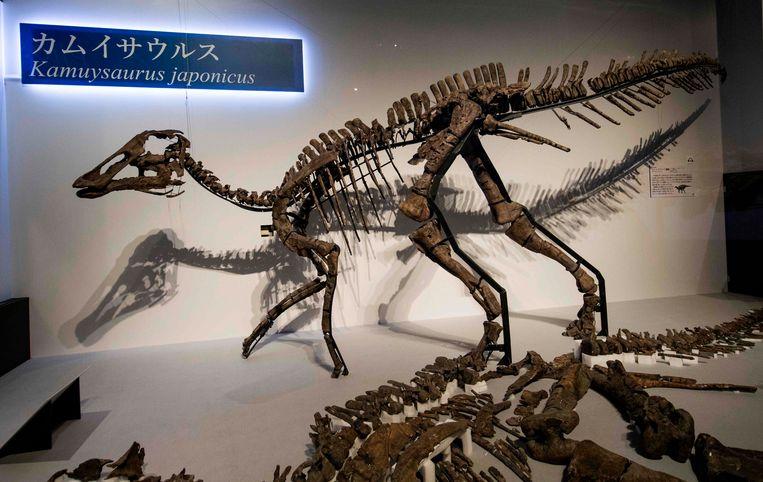Het skelet behoorde tot een nieuwe soort plantenetende dinosaurus. Beeld AFP