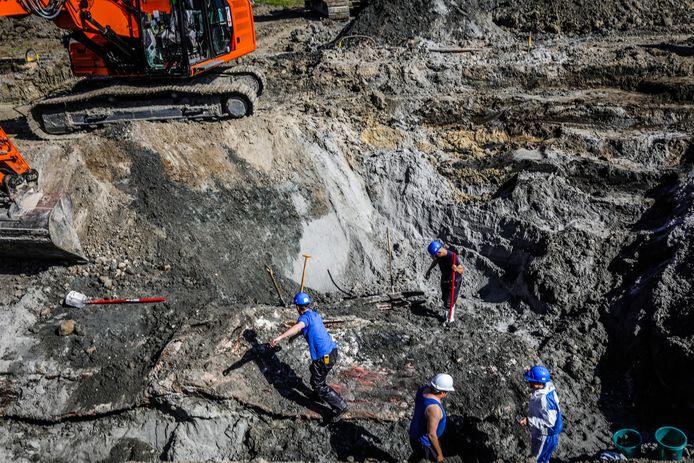 De opgraving van potvis Valentijn vorig jaar.
