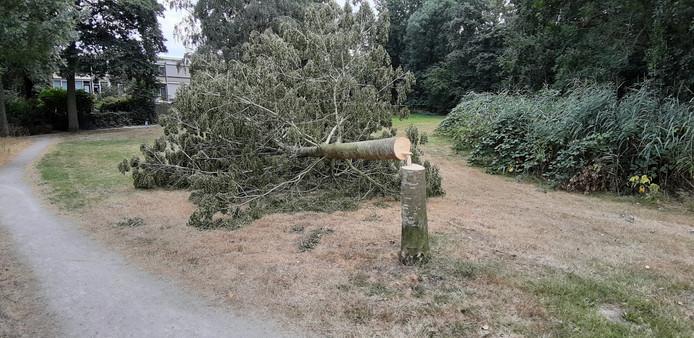 De omgezaagde boom in Holtenbroek.
