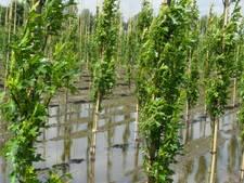 Boxtelse boomkwekers claimen bijna half miljoen bij waterschap De Dommel