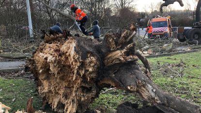 Bomen vallen op huis en straten