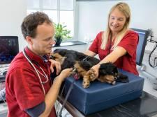 Niek Beijerink uit Vught is een van de weinige veterinair cardiologen uit Nederland