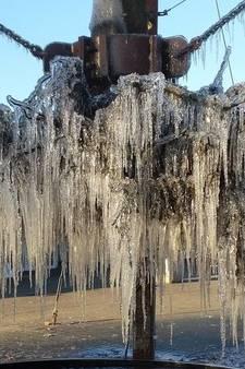Krijgt de zwevende boom in Velp bladeren?