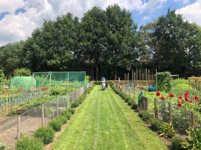 Het terrein van tuinvereniging Ons Hufke ligt er keurig bij en telt zo'n 75 percelen.