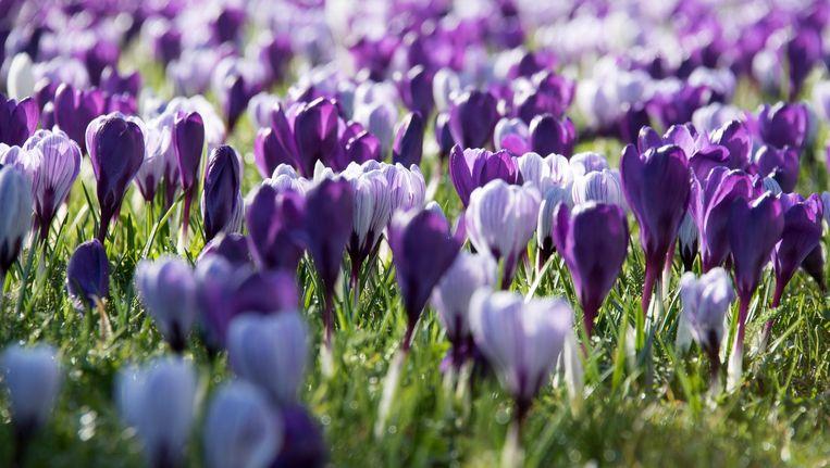 Het voorjaar komt eraan Beeld anp