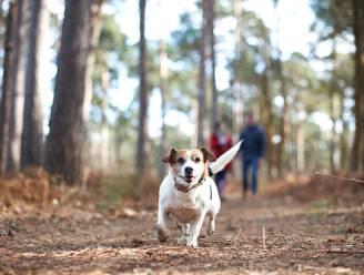 HET DEBAT. Zijn boetes en strengere controles op loslopende honden waar dat verboden is een goed idee? Dit is jullie mening