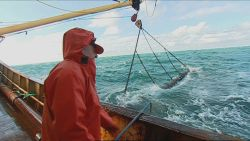 Belgische visvangst flink gedaald