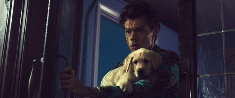 Harry Styles in 'Kiwi'