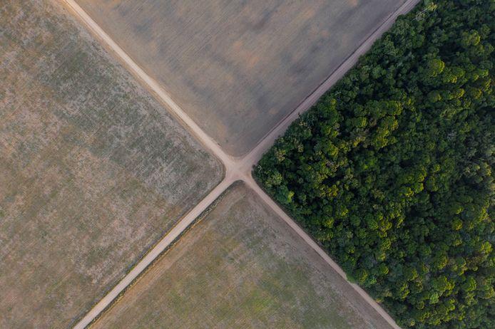 Het Amazonewoud (rechts) heeft plaats moeten maken voor soyavelden in Belterra, in de Braziliaanse staat Para.