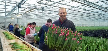 De miljoen tulpen van Jan Boot zijn er negen miljoen geworden