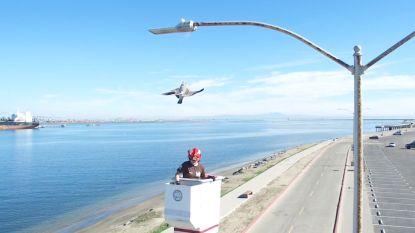 VIDEO. Deze meeuw zit vast in een visdraad aan een lantaarnpaal, maar wordt gered
