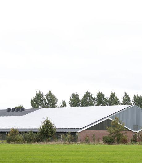 Minder stank rondom varkenshouderij  Walemaatweg? 'Laat gemeente Berkelland meebetalen'