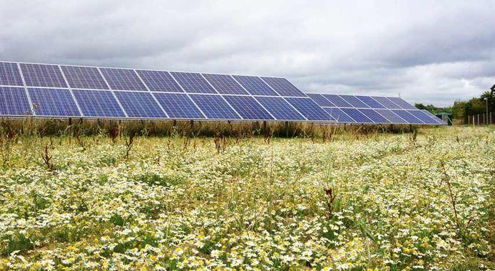 Zo moet het zonnepark in Ermelo er ongeveer uit gaan zien, inclusief bloemrijke border.