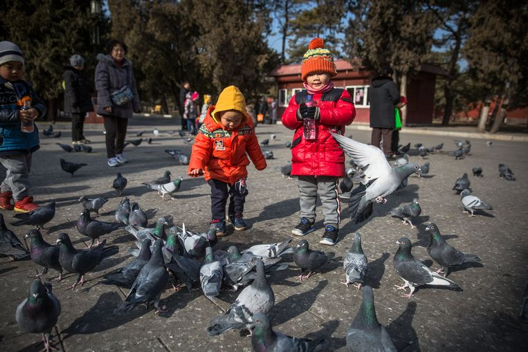 Kinderen voederen duiven in een pak in Peking.