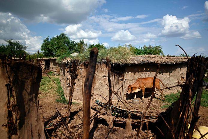 """Les retombées économiques de la pandémie de coronavirus ont augmenté les cas de mariages d'enfants en Afrique. """"Certaines familles ont faim et la perspective de recevoir deux ou trois vaches comme dot est assez tentante"""", a-t-il déclaré."""