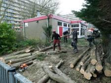 Boos over 'respectloze bomenkap' in Sliedrecht