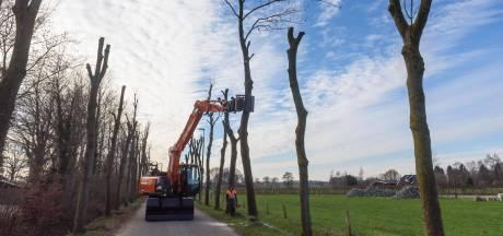 Nog eens tientallen essen ziek in Veenendaal