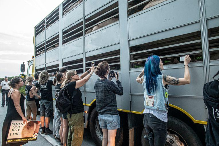 De activisten maken filmpjes en foto's van de vrachtwagen met varkens die toekomen aan het slachthuis.