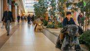"""""""Spelend shoppen in Waasland Shopping Center"""": koopzondag én speelplezier voor jong en oud"""