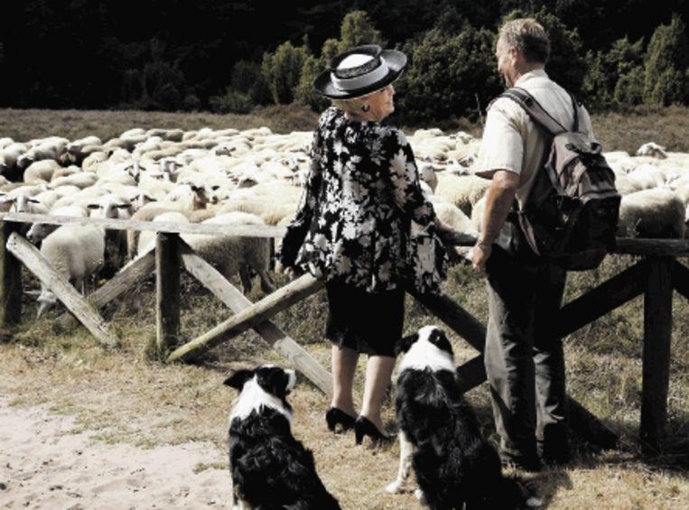 Koningin Beatrix spreekt in Dalfsen met een schaapsherder tijdens haar bezoek aan de streek Salland. (FOTO ANP) Beeld