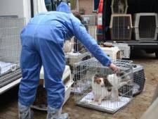 Omstreden hondenfokker Lettele mag half jaar niet met dieren werken