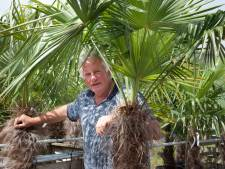 Gert Pels reist elke winter naar Zuid-Europa om palm- en olijfbomen te verkopen in Harmelen