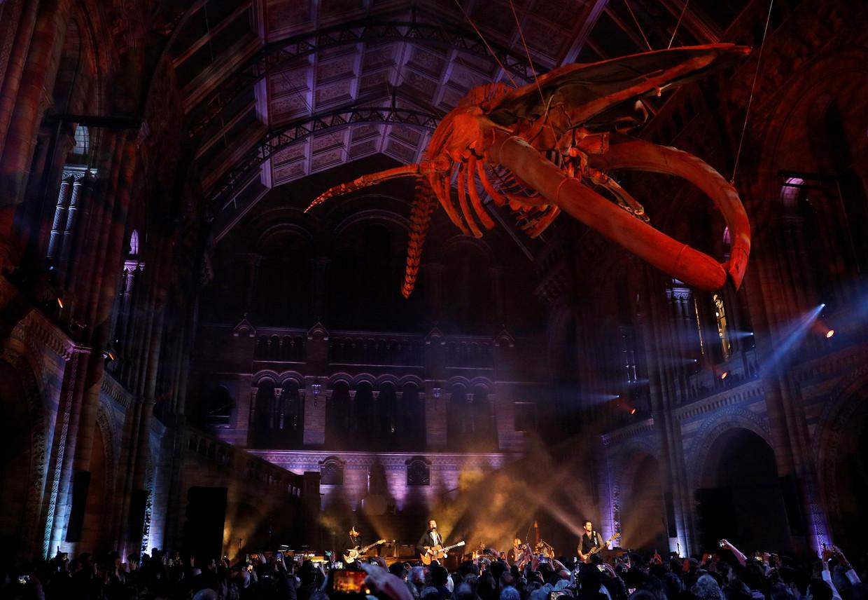 Coldplay in het Natural History Museum in Londen, onder het skelet van een blauwe vinvis.  Beeld Reuters