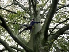 17-jarige Niels haalt dood hout uit 350 jaar oude beuk