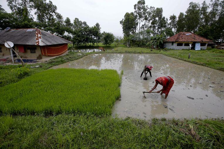Dorpsbewoners aan het werk op een landbouwveld. Ook de gewassen worden bedreigd  door het opkomende water.