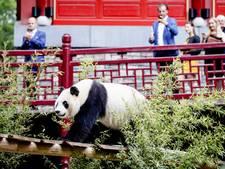 Panda's van Boekhoorn mogelijk op shirt NEC