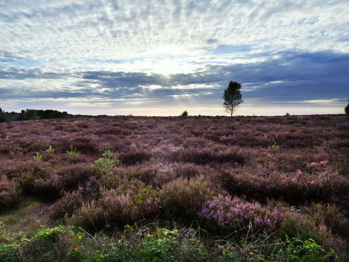 Iedereen moet gratis kunnen genieten van de natuur op de Sallandse Heuvelrug, vindt SGP'er André Scheppink.