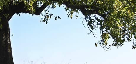 'Doorgaan met onderhoud bomen in Lochem'