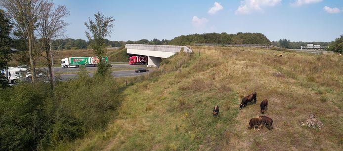 De natuurbrug over de A50 bij Schaijk. Aan de overkant ligt Herperduin, het Osse zustergebied van de Maashorst.