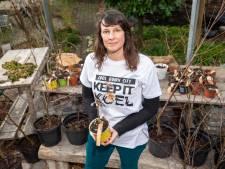 Opvliegers in Rotterdam? Haal een gratis boom voor verkoeling