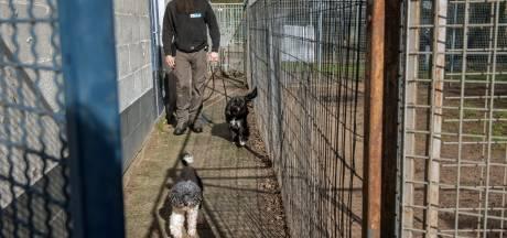 Dierenasiel De Ark Harderwijk terug van 200 naar 150 honden