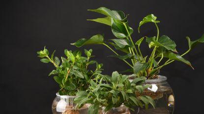 Haal je vijverplanten in huis: zo maak je een watertuin voor binnen